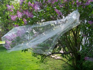 1 tier knee length veil