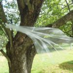 Brides of August: Holiday Wishes Congratulations!